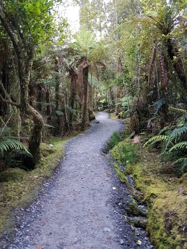 Nouvelle-Zélande, un levé de soleil féerique sur le lac Matheson ☀️ 7