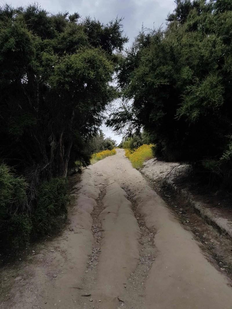 Nouvelle-Zélande, Wanaka notre ville coup de coeur ❤ 27