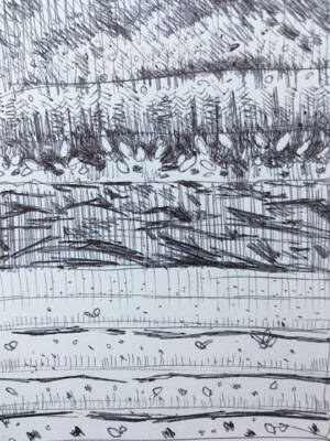 -- a preliminary field sketch of the marigold field, black tarp, and irrigation lines.