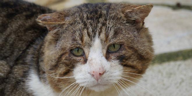 Safi: devant la Justice pour avoir brûlé 40 chats