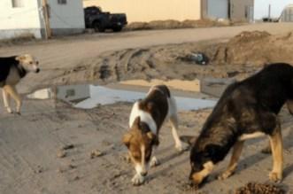 Une fillette de 3 ans tuée par un chien à Casablanca