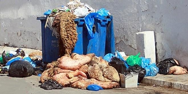 Aïd al-Adha à Tanger: environ 9.000 tonnes de déchets collectées