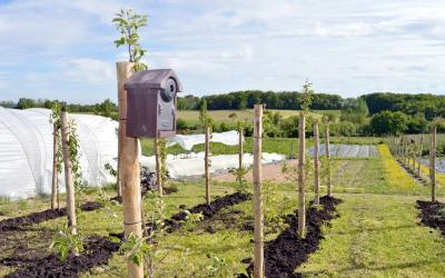 Créer ou reprendre une micro-ferme en maraîchage bio intensif