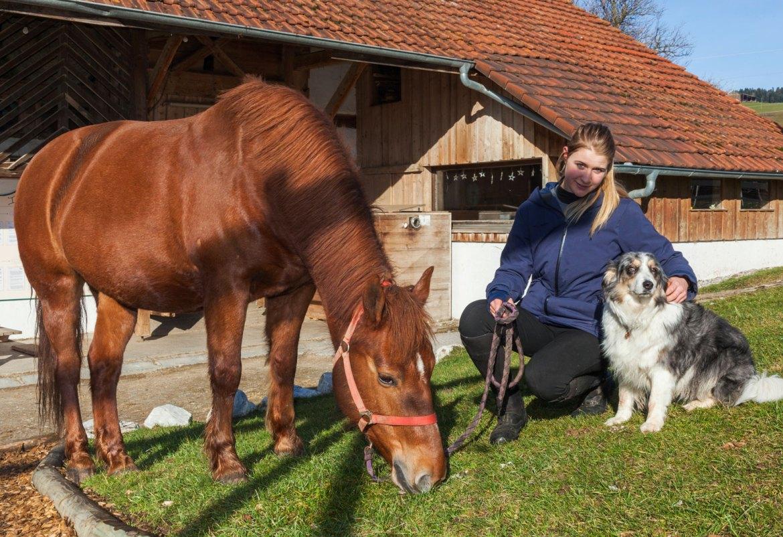 chevaux à vendre, centre équestre les kà, ferme équestre, école d'équitation - jument franche-montagne - stella