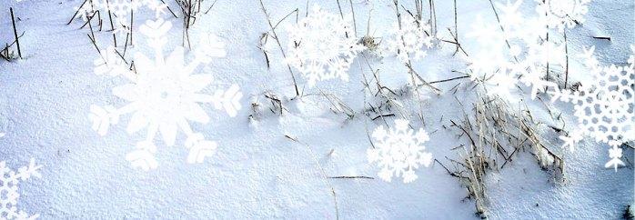 Reiki Winter Holiday at Lesley James MD