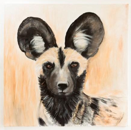 Wild Dog 100 x 100