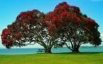 tree-1114148_640