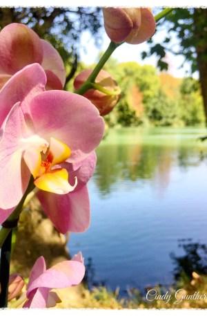 Orchidées de Hollande