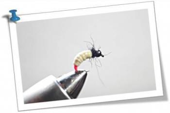 les nymphes les moucheurs nantais