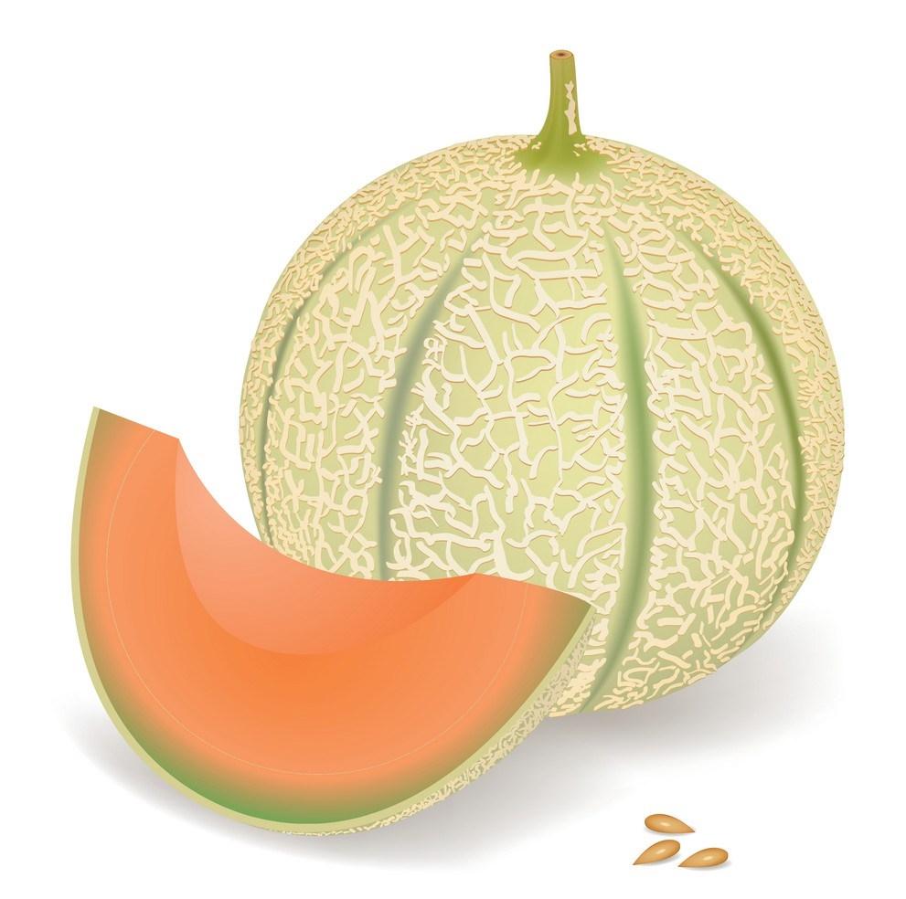 melon-vector-492339.jpg