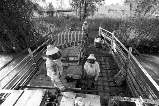 Boatmen's beekeepers of the Parana Delta