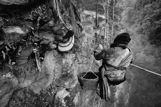 The Tiger Man Honey Hunting