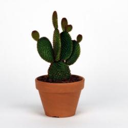 img-entretient-cactus