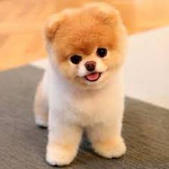 Le chien Boo