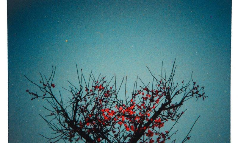 Notti di giugno (Jaime Gil de Biedma)