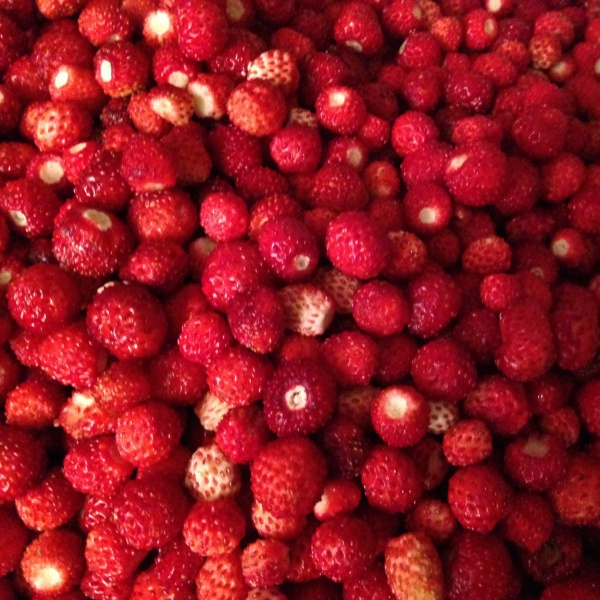 fraises des bois en gros plan