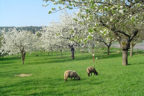 18 Avril - Les Bourdes, rituel du printemps
