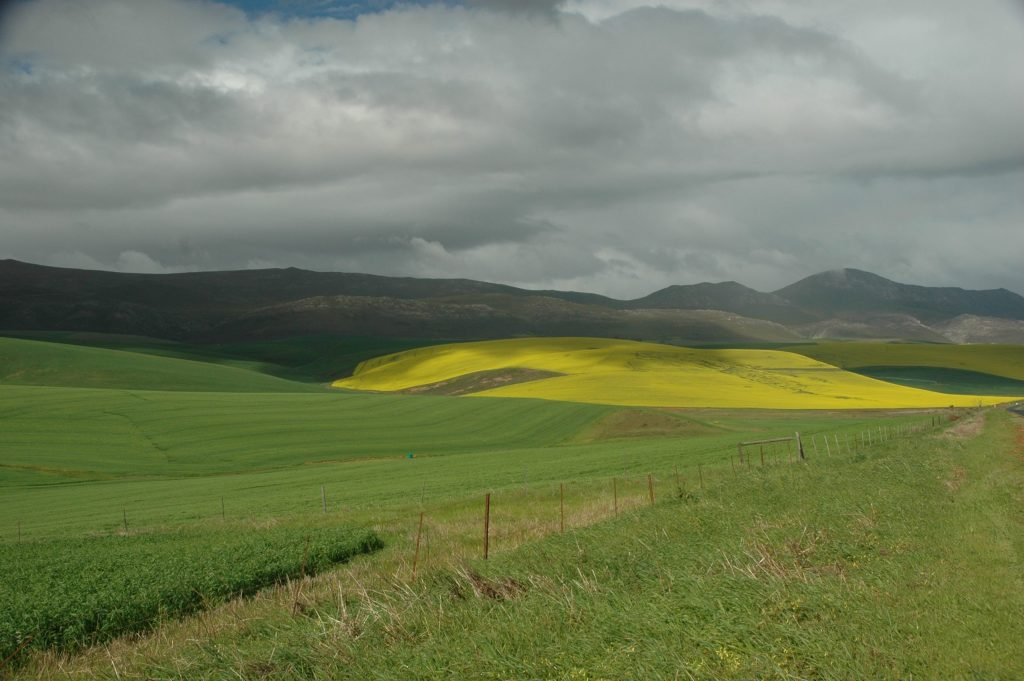 Afrique du Sud 95