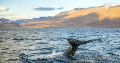 dove vedere le balene in natura