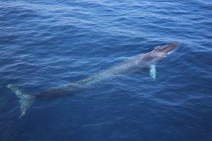 personaggi in cerca di balene