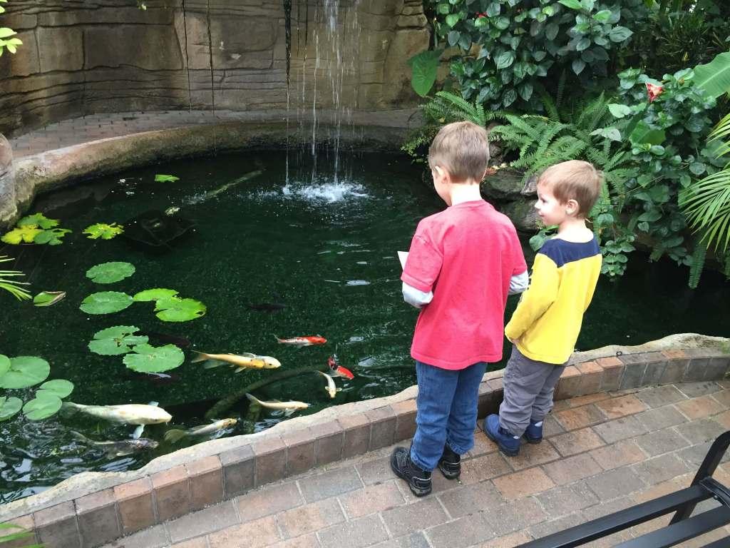 Garfield Park Conservatory Koi Pond