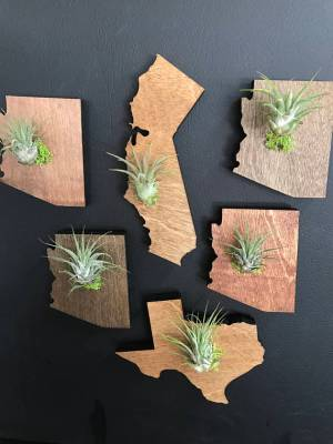 Home State Gifts - State Air Plant Magnet from Etsy Seller Happybrands