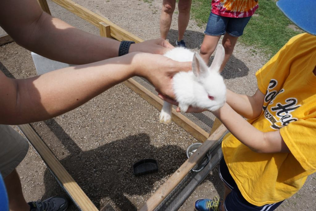 Shipshewana with Kids - Dutch Creek Farm bunny