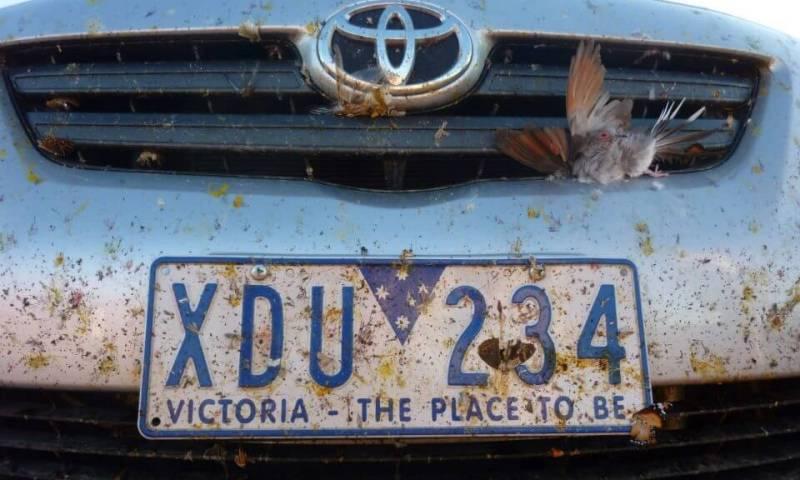 pare-choc road trip Australie