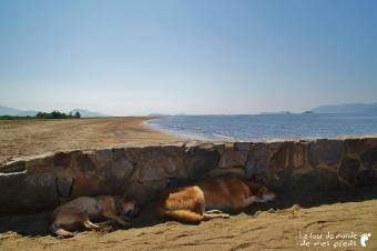 chien plage Paraty