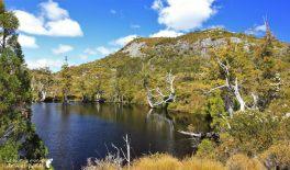 Cradle-park-tasmanie (10)
