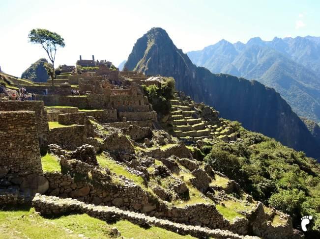 panorama Machu Picchu arbre