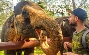vlog thaïlande éléphants
