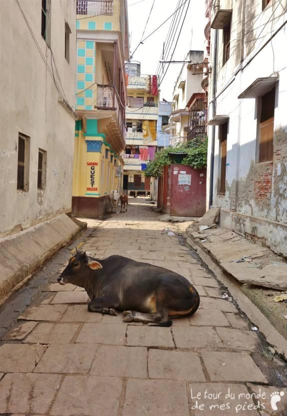 Varanasi-Inde-21_GF