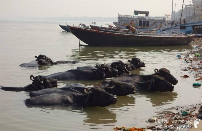 Varanasi-Inde-25_GF