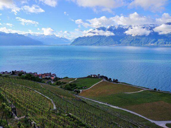 Lavaux panorama vignes