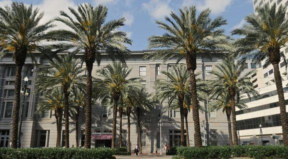 palmiers nouvelle orleans
