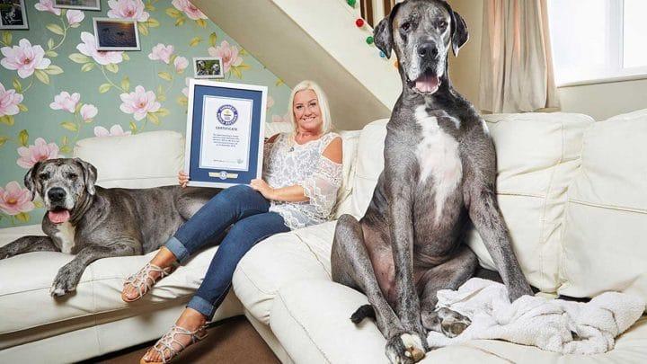 freddy le plus grand chien au monde est mort