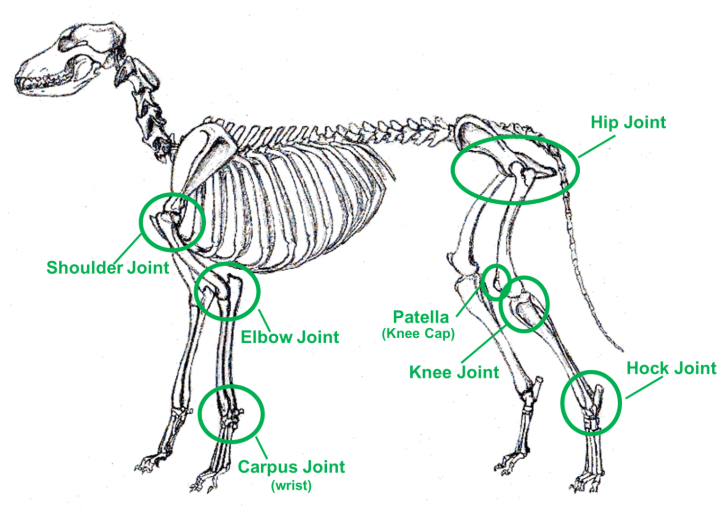Let S Talk Dog Joint Pain Problems