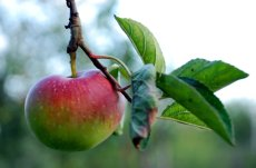 healthy eating tips apple