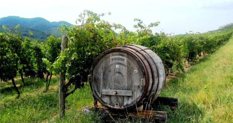 Goče – vas med vinogradi