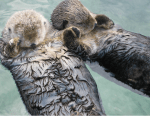 A couple of sleep facts from the animal kingdom