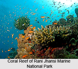 2_Coral_Reef_of_Rani_Jhansi_Marine_National_Park.jpg