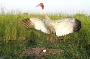 Darrah-National-Park-Source-beautyspotsofindia.jpg