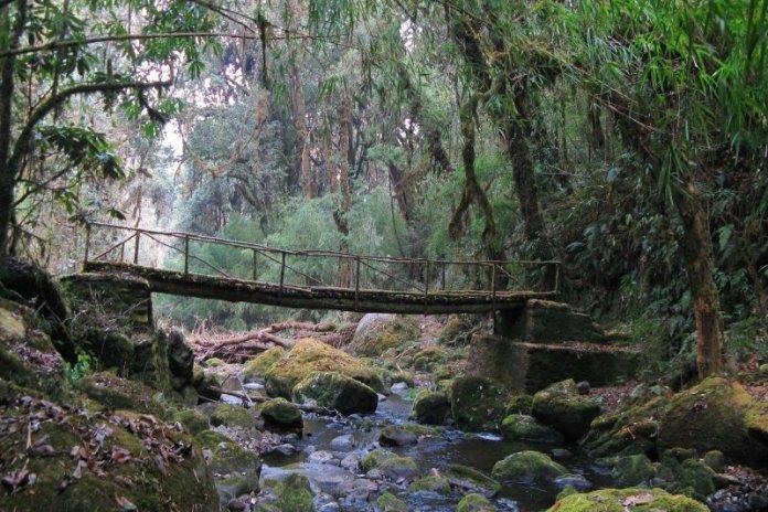 Neora_Valley_National_Park1.jpg