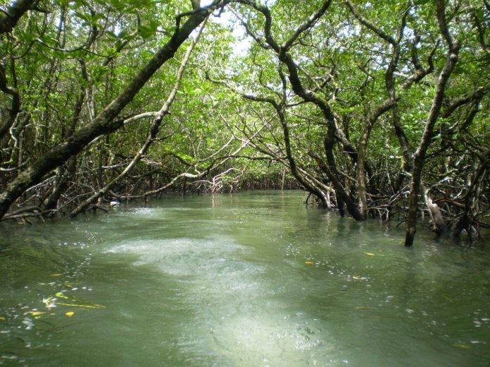galathea-national-park-andaman-and-nicobar-islands-india-1.jpg
