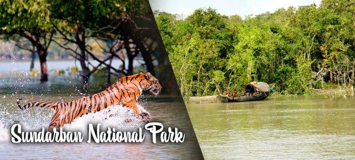 sundarban-national-park-west-bengal.jpg
