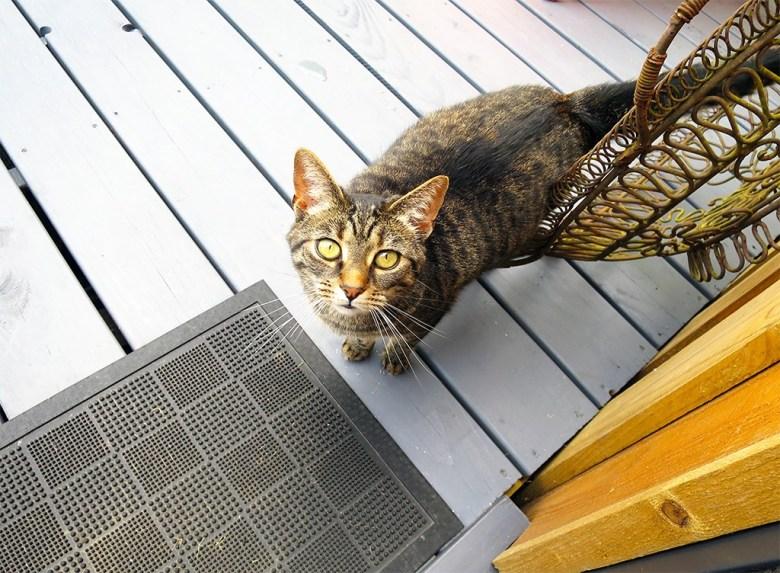 Cute Cabin Cat