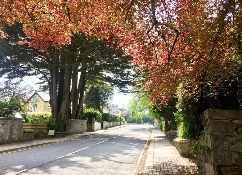 Leafy Truro Streets