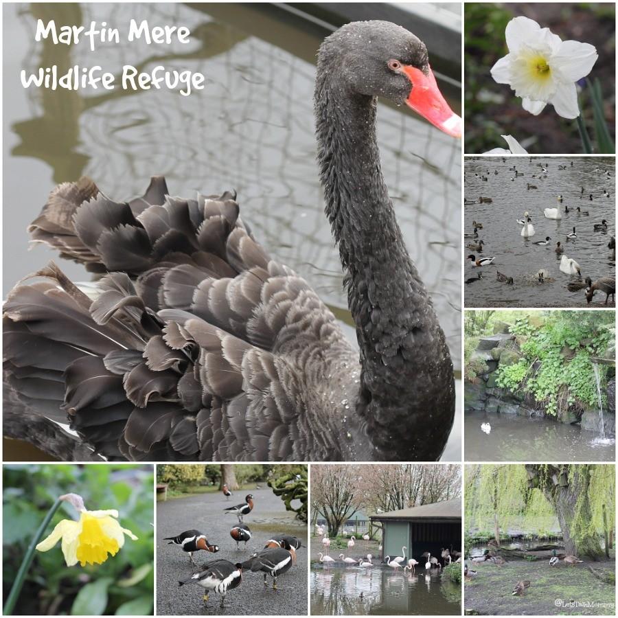 MartinMereCollage