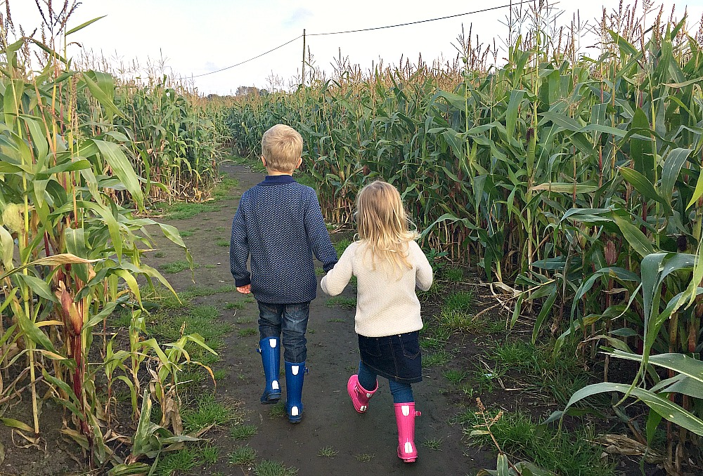 Me & Mine October 2016 Corn Maze Kenyon Hall